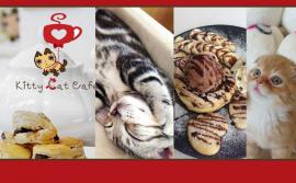 Kitty Cat Cafe